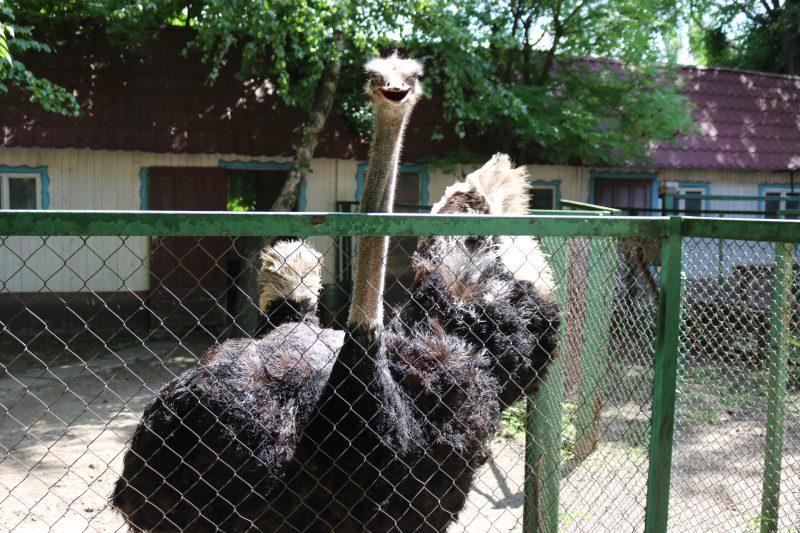страус Стьопа в зоокуточку