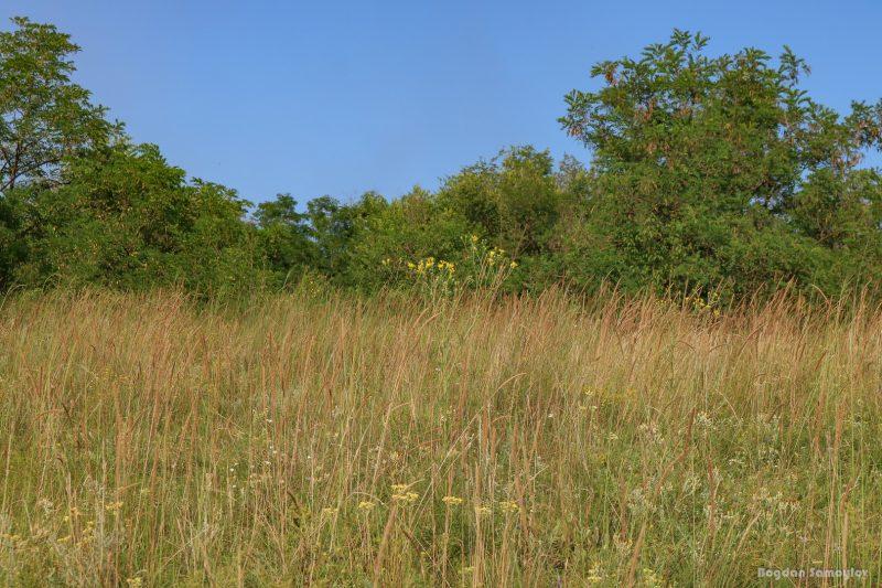 Цветы и солнце: Хортица в середине лета выглядит очаровательно