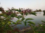 Растение на берегу реки Конка