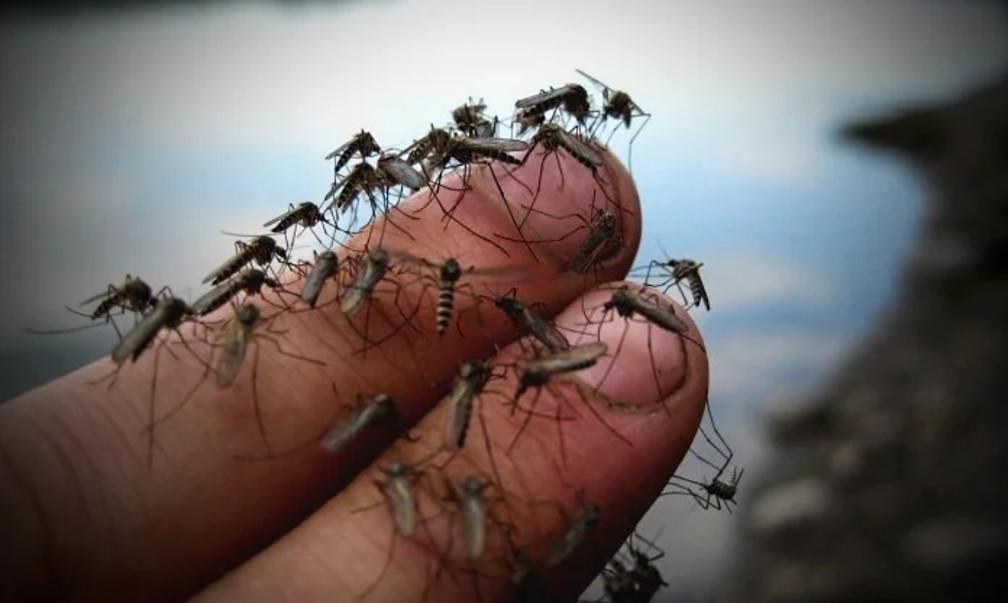 На запорожском курорте нашествие комаров: как с этим будут бороться