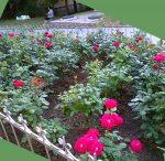 на Аллее роз