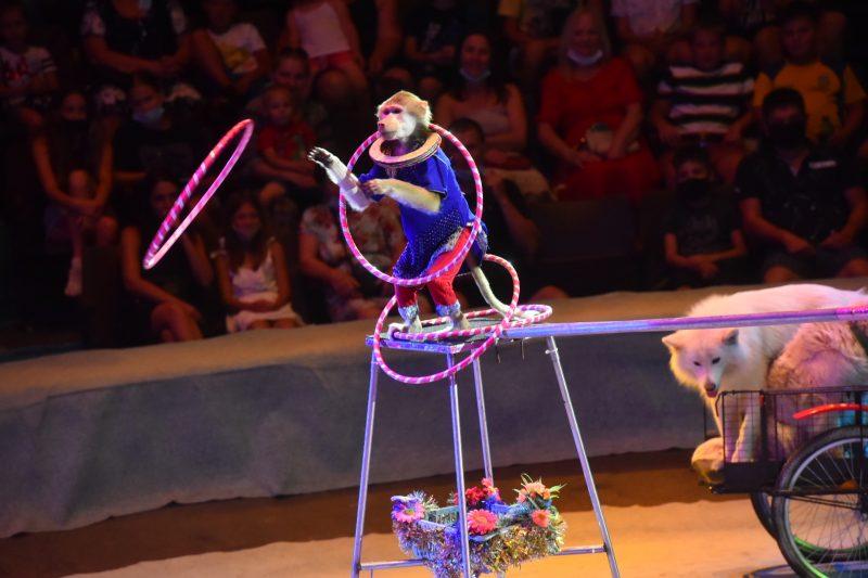 Программа «Цирк без обмеження!» продлится всего лишь 10 дней – до 18 июля