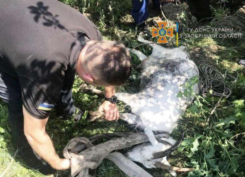 В Пологовском районе пожарные спасли козу, которая упала в колодец