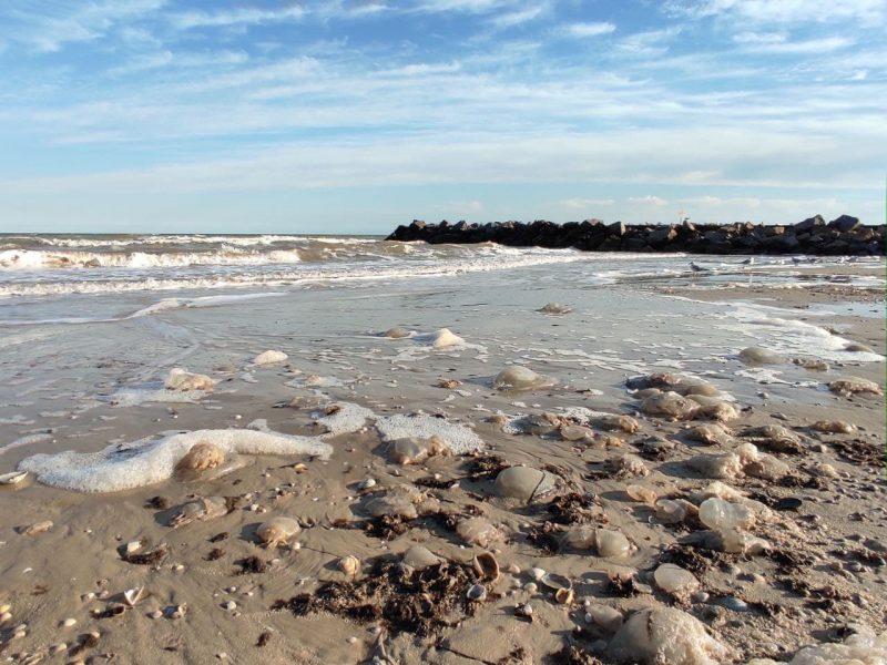 медузы на берегу
