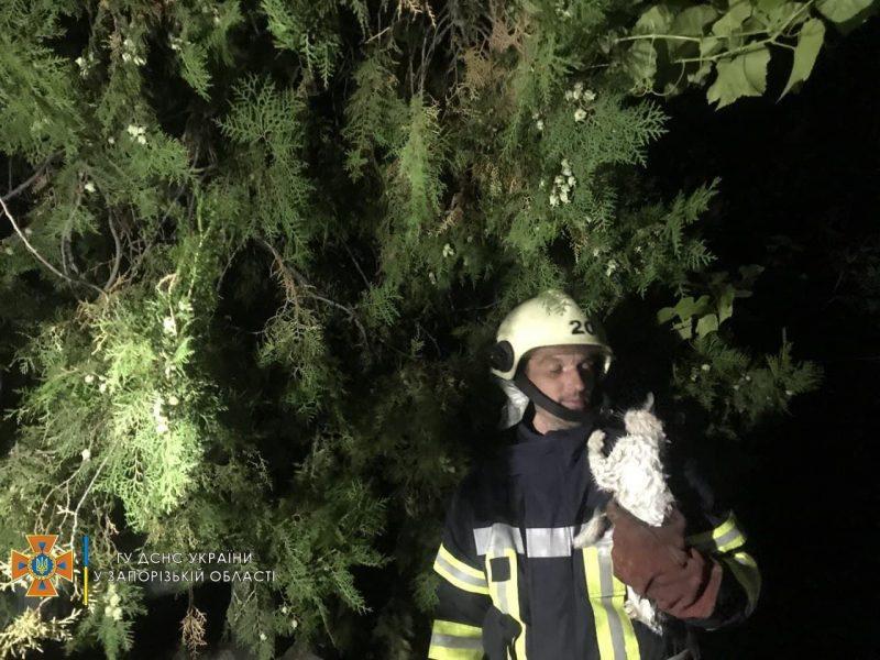 В Запорожской области спасли троих котят