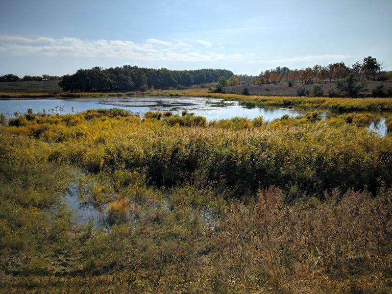 В Запорожской области царит золотая осень - фото