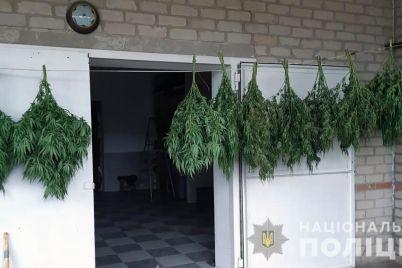 60-letnij-melitopolecz-vyrastil-vo-dvore-bolshie-kusty-marihuany-foto.jpg