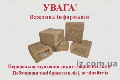 beshenyh-lis-v-zaporozhskoj-oblasti-nejtralizuyut.jpg
