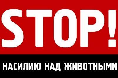 biznes-na-zhivoderstve-na-zaporozhskom-kurorte-otdyhayushhim-predlagayut-sdelat-foto-s-izmuchennymi-zhivotnymi-video.jpg