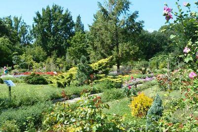chim-mozhe-zdivuvati-zaporizkij-botanichnij-sad.jpg