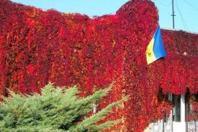 chinovnik-ekoinspekczii-mozhet-vozglavit-kommunalnoe-predpriyatie-zaporozhzelenhoz.jpg