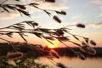 czvety-yashhericzy-i-shikarnye-zakaty-kak-prohodit-leto-na-horticze-foto.jpg