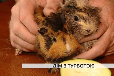 dim-iz-turbotoyu-na-zaporizhzhi-yakih-tvarin-prihistiv-reabilitaczijnij-czentr.jpg