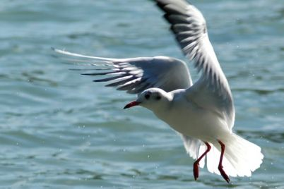 ekologicheskoe-bedstvie-nastupaet-na-poberezhe-azovskogo-morya-chudom-spasli-chajku-video.jpg