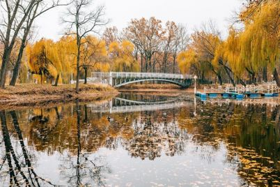 ekskavatory-stroitelnaya-tehnika-i-vyrublennye-derevya-chto-proishodit-v-parke-dubovaya-roshha.jpg