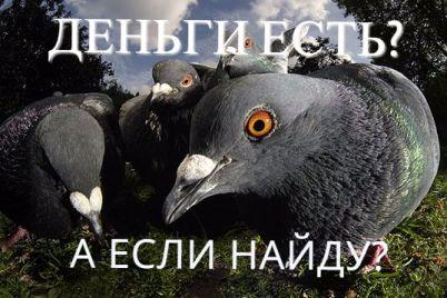 foto-s-golubyami-kak-ocherednoj-razvod-kak-zaporozhecz-edva-ne-otdal-za-foto-s-pticzami-neskolko-soten-foto.jpg
