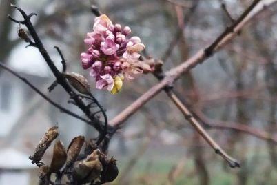 fotofakt-v-zaporozhskoj-oblasti-posredi-zimy-zametili-prirodnuyu-anomaliyu.jpg
