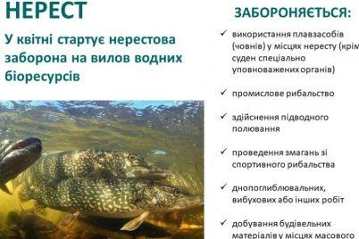 gorozhanam-rasskazali-gde-nelzya-lovit-rybu-v-zaporozhskoj-oblasti-foto.jpg