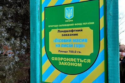 griby-i-led-kak-vyglyadit-les-na-lysoj-gore-v-zaporozhskoj-oblasti.jpg