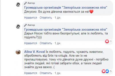 istoriya-hatiko-so-schastlivym-konczom-zhitelej-zaporozhya-pokorili-dve-sobaki-podruzhki-foto.png