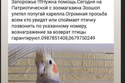 iz-zaporozhskogo-zoomagazina-uletela-ekzoticheskaya-avstralijskaya-pticza.jpg