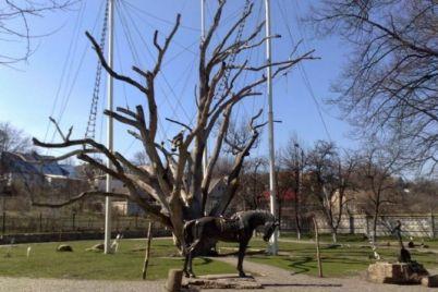 kak-menyalsya-legendarnyiy-zaporozhskiy-dub-za-poslednie-113-let-video.jpg