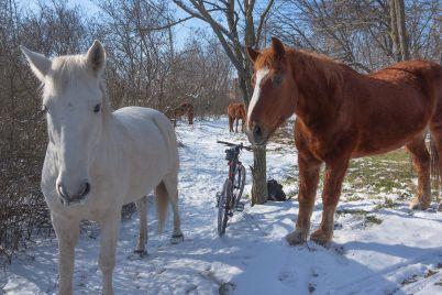 kak-v-skazke-zaporozhskij-fotograf-zapechatlel-uhodyashhuyu-zimu-na-horticze-foto.jpg