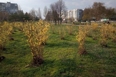 kak-vyglyadit-glavnyj-park-spalnogo-rajona-zaporozhya-nakanune-usileniya-karantinnyh-mer-foto.jpg