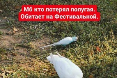 kurez-k-stae-golubej-v-zaporozhe-pribilsya-neobychnyj-gost-foto.jpg
