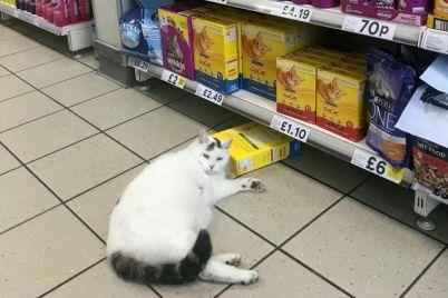 kurez-v-zaporozhskom-supermarkete-zametili-pushistogo-pokupatelya-foto.jpg