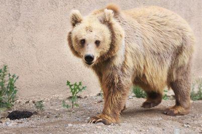 medvedicza-blondinka-iz-zaporozhskoj-oblasti-pereehala-v-prostornuyu-berlogu-s-lichnym-bassejnom.jpg