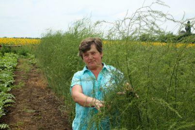 meshkanka-zaporizkod197-oblasti-zapatentuvala-42-reczepti-salativ.jpg