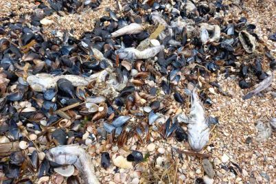 na-azovskomu-mori-zaginuli-majzhe-500-tisyach-rib.jpg