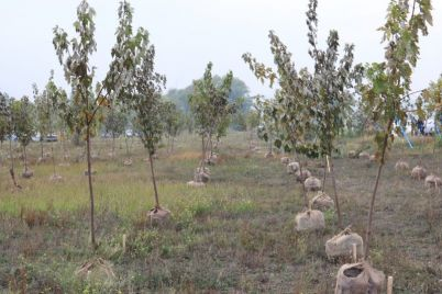 na-beregu-dnepra-v-promyshlennom-rajone-zaporozhya-vysadili-350-molodyh-derevev.jpg