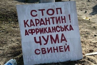 na-fermi-zaporizhzhya-vid-virusu-zaginuli-24-svini.jpg