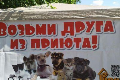 na-ploshhadi-zaporozhya-prohodit-ochen-trogatelnaya-akcziya-foto.jpg