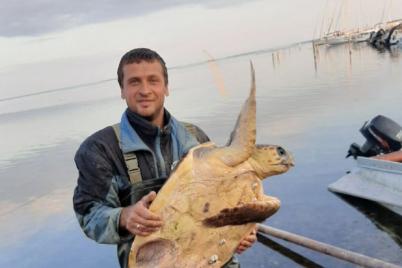 na-populyarnom-ukrainskom-kurorte-rybaki-vylovili-ogromnuyu-cherepahu-foto.png