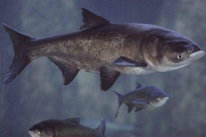 na-pravoberezhnom-plyazhe-poyavilos-tri-tonny-ryby-uznaj-podrobnosti.jpg
