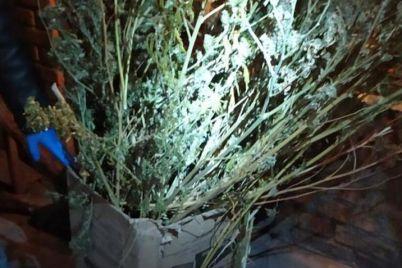 na-zaporizhzhi-cholovik-zberigav-vdoma-majzhe-4-kg-narkotikiv-foto.jpg