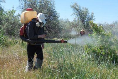 na-zaporozhskom-kurorte-nakonecz-to-vzyalis-za-komarov.jpg