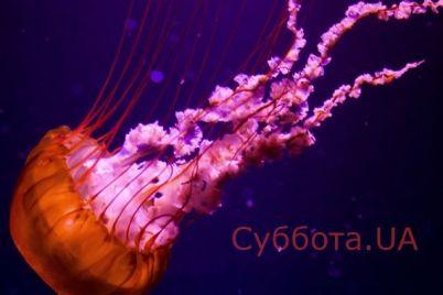 na-zaporozhskom-kurorte-otdyhayushhih-umilila-meduza-podplyvshaya-k-beregu-video.jpg