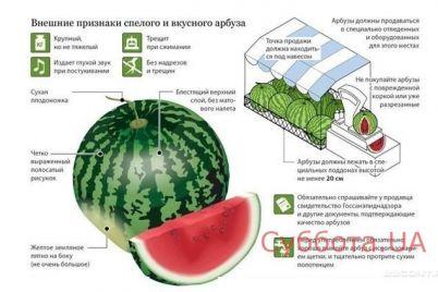na-zaporozhskom-kurorte-proverili-na-nitraty-arbuzy-video.jpg