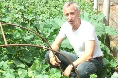 ogurecz-na-veryovochke-v-zaporozhskoj-oblasti-na-ovoshhnom-rynke-predlozhili-neobychnyj-tovar-foto.jpg