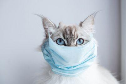 otstupaet-kakaya-situacziya-s-koronavirusom-v-zaporozhe-na-28-fevralya.jpg
