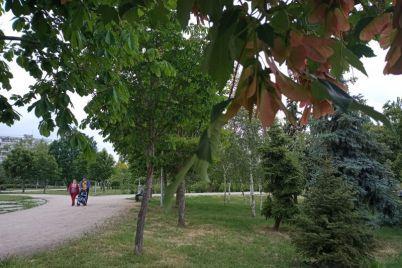 park-v-odnom-iz-rajonov-zaporozhya-czvetet-i-zeleneet-foto.jpg