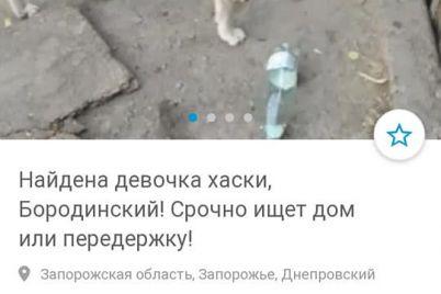 po-uliczam-zaporozhya-bluzhdaet-odinokij-pyos-severnoj-porody-foto.jpg