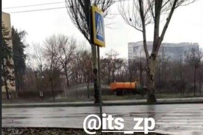 pochemu-by-i-net-zaporozhskie-kommunalshhiki-polivayut-derevya-dazhe-pod-livnem-foto-1.jpg