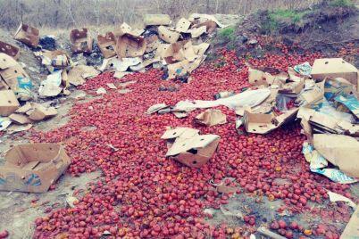 poryadka-100-kg-pomidor-vybrosili-v-spalnom-rajone-zaporozhya-foto.jpg