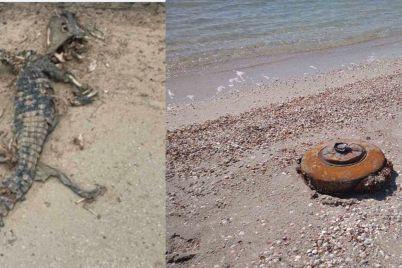 protitankova-mina-ta-mertvij-krokodil-na-azovskomu-uzberezhzhi-viyavili-divni-znahidki.jpg