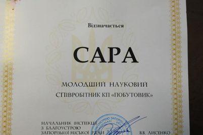 puhnastij-spivrobitnik-zaporizkogo-komunalnogo-pidprid194mstva-otrimav-nagorodu.jpg